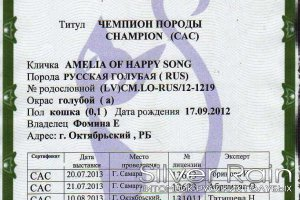 GICh Amelia of Happy Song, dob 17.09.12